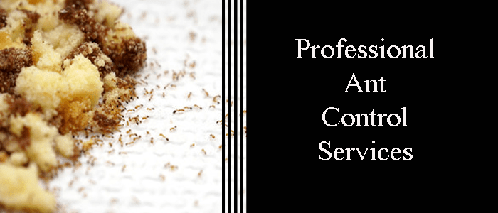 Professional Ant Controllers