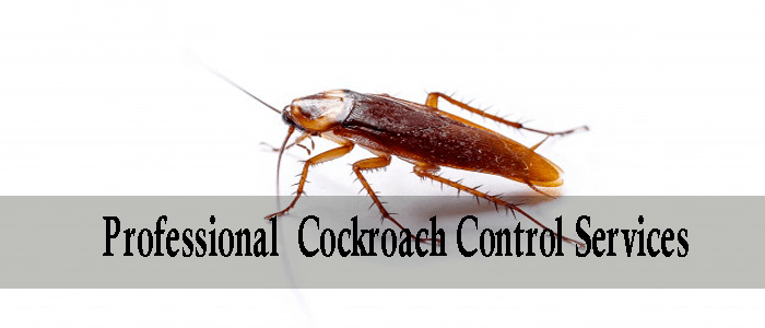 Professional Cockroach Control Services